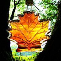 Javorový sirup Medium 250 ml dároková skleněná láhev